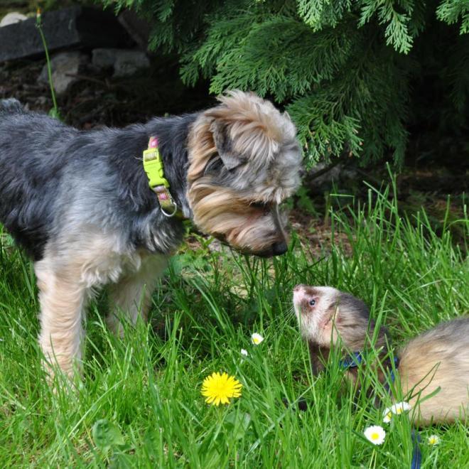 Humphrey et Oliver