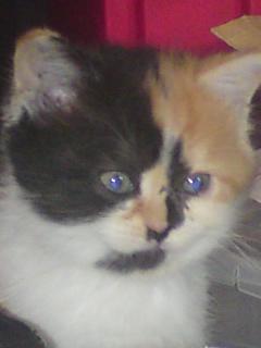 Baccara, la petite chatte offerte à mon fils par ma fille pour son anniversaire