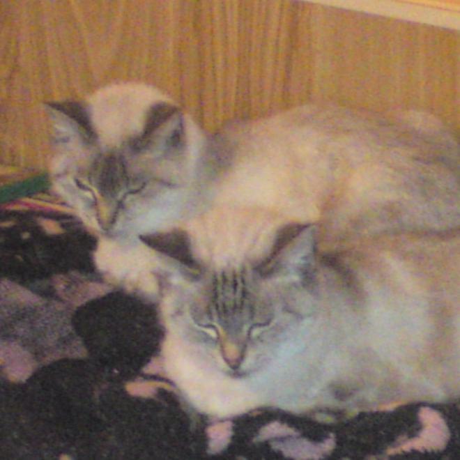 les jumelles Alice et Anaïs