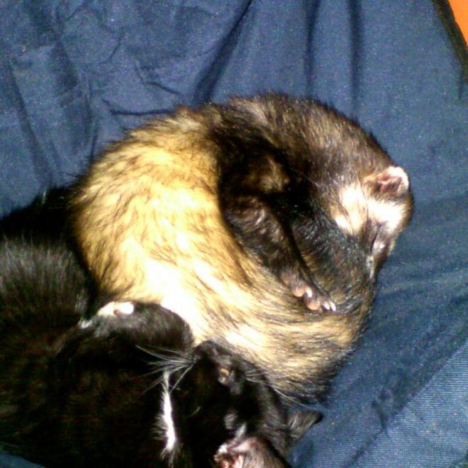 ti'chat noir et kassandre